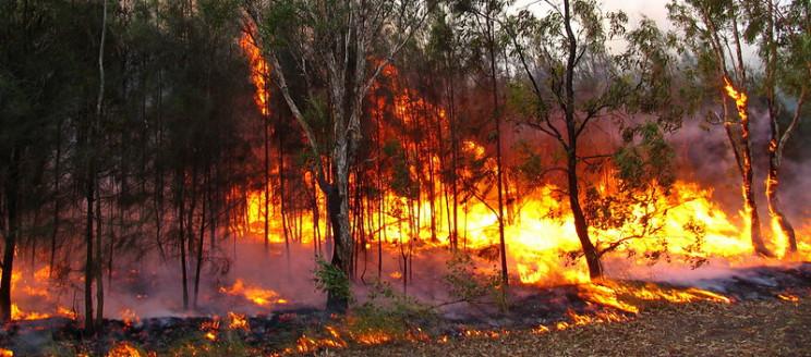 history of Australian bushfires forest