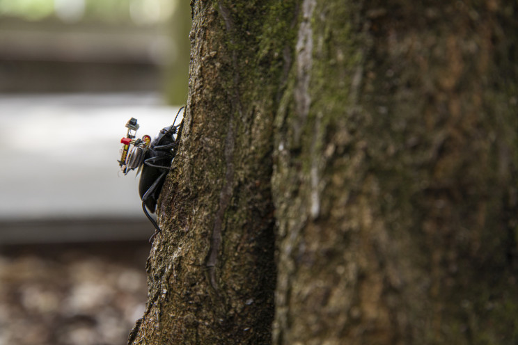 Wireless Tiny Cameras Can Be Mounted On Insects