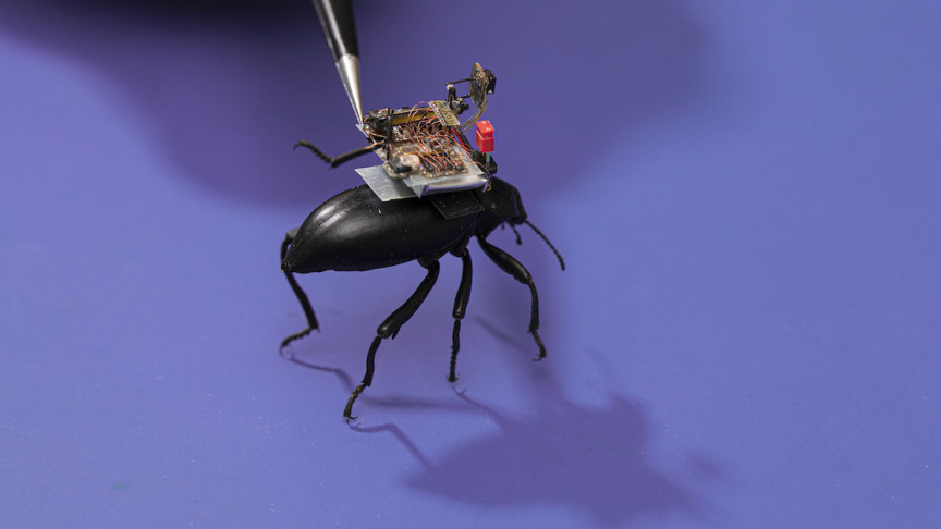 Wireless Tiny Cameras Can Be Mounted On Insects - Interesting Engineering