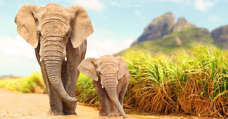 Impending Elephant Extinction Will Significantly Raise Carbon Dioxide Levels
