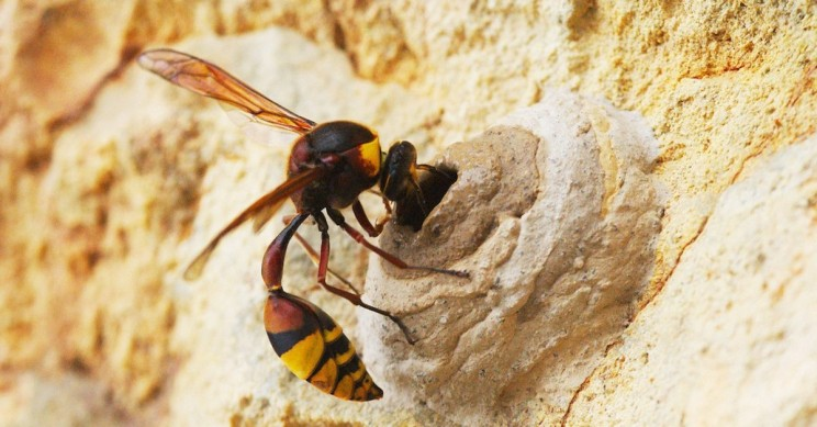 Wasps Become the First Known Invertebrates to Demonstrate Reason Using Logic