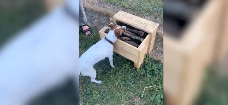 A Shortage of Sticks Prompts Man to Build 'Stick Library' for Dog Park