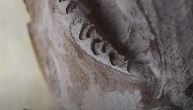 power carve shark second row teeth