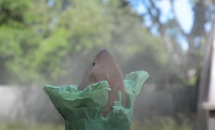 power carve shark spray
