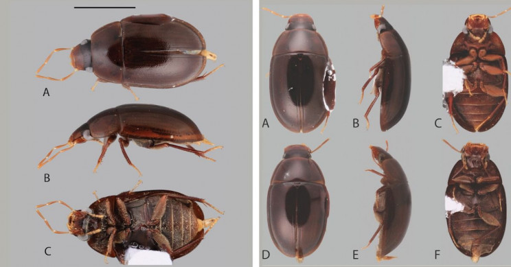 18 New Species of Beetles Discovered in South America by Undergraduate Student