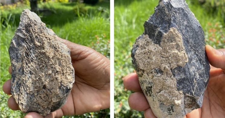 1.4 Million-Year-Old Hippo-Bone Hand Axe Discovered In East Africa
