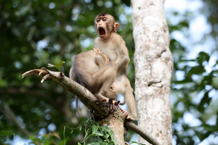 Comedy Wildlife Photography Awards 2020 Finalists Announced