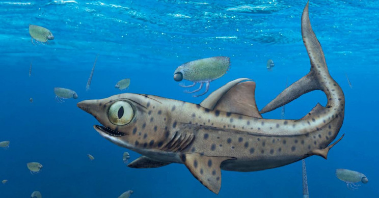 This Creepy 370-Million-Year-Old Shark Could Rotate Its Jaws