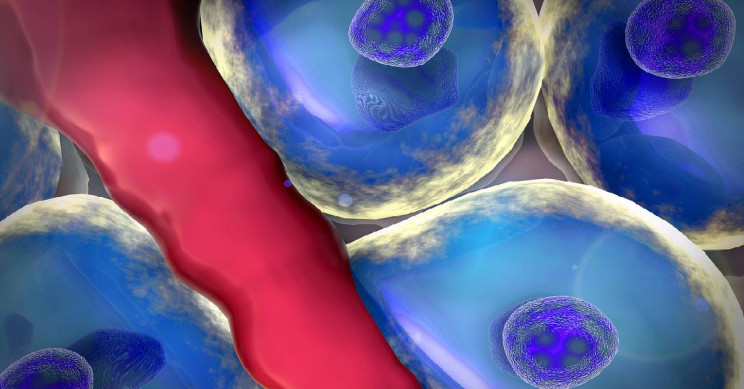 Newly Identified Cell May Be Able to Regenerate Liver Tissue