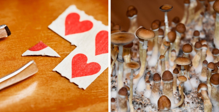 7 Fascinating Psychedelics That Are Making a Resurgence in Scientific Research
