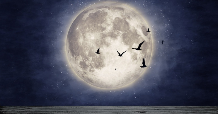 Moonlight Dictates When Some Birds Fly South