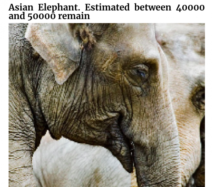 Incredible Images of Endangered Species in Pixels to Show How Many Are Left