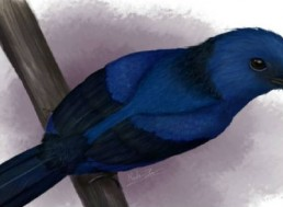 Color Blue Distinguished for the First Time Ever in Bird Fossils