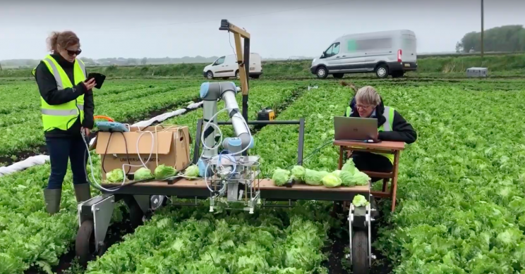 A 'Vegebot' Has Been Built to Harvest Lettuce by Using Machine Learning