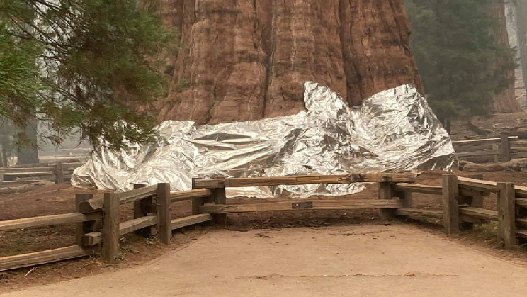 Park Crew Wraps the World's Biggest Tree in Foil as Wildfires Scorch the Earth