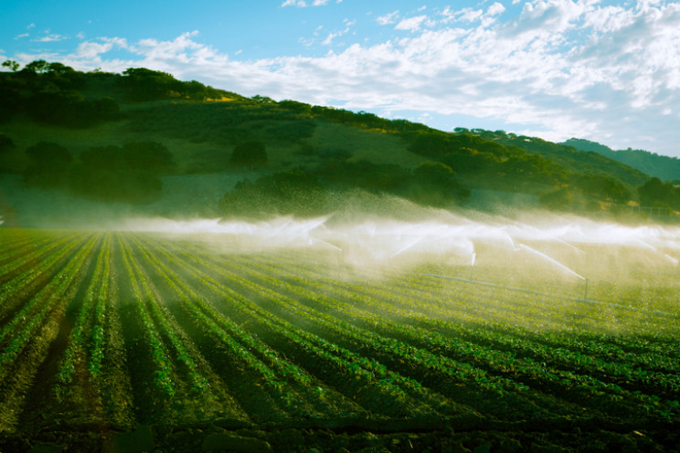 Irrigation in California's Central Valley