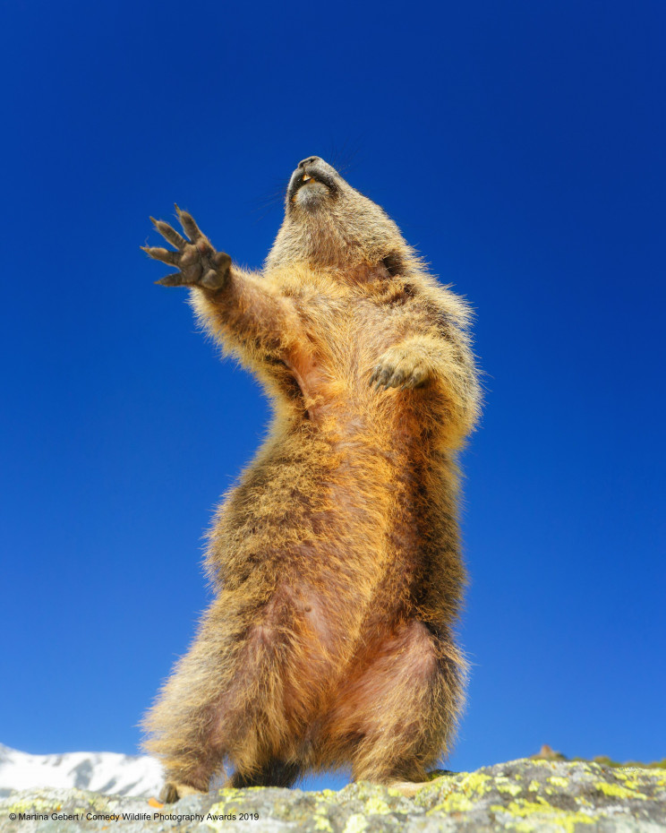 This Year's Comedy Wildlife Photography Awards Winners Announced