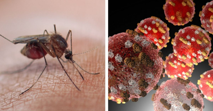 13 of the Most Deadly Diseases in Human History