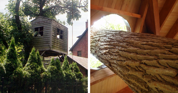 "Here's How to Build a Treehouse in 10 ""Easy"" Steps"