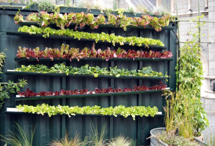 domestic vertical farming