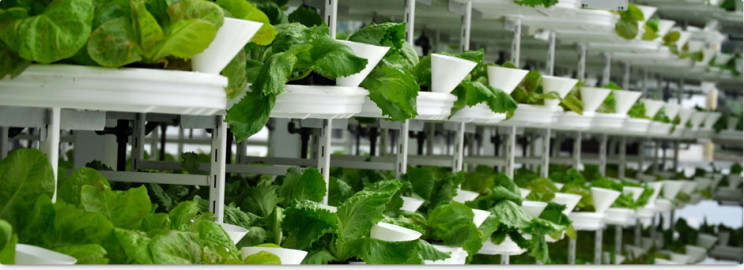 vertical farms verticrop
