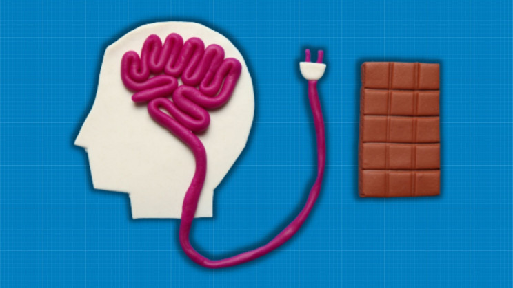 Scientists Uncover the Mechanism of Brain's 'Hunger Switch'