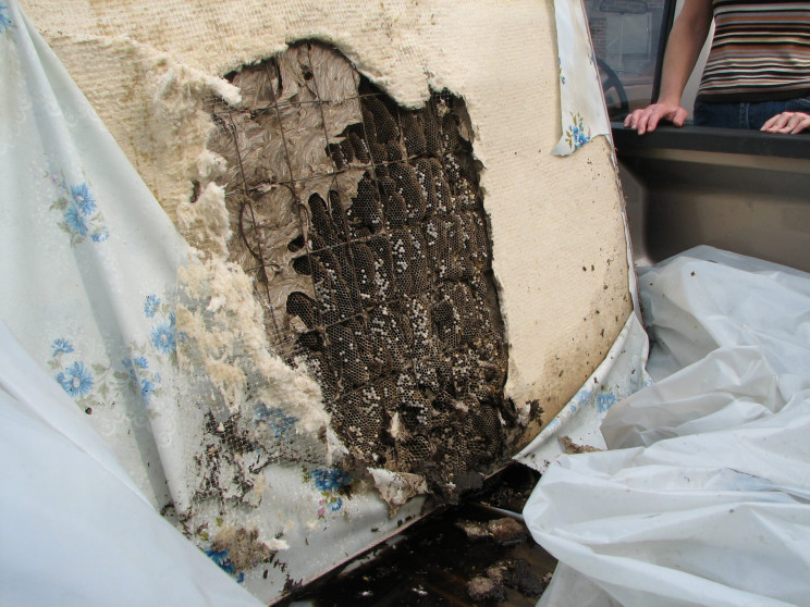 Alabama Sees Massive Yellowjacket Nests Starting to Grow yet Again