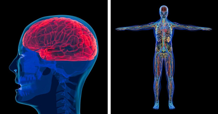 9 Studies That Show How Our Brain and Body Age at Different Speeds