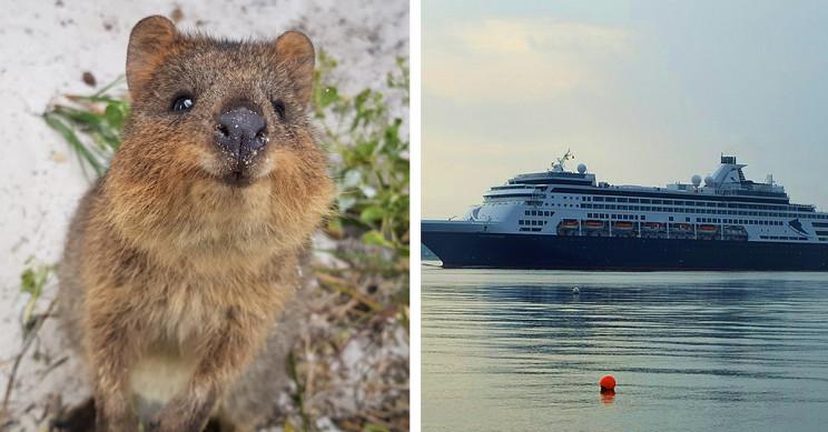 Australia Island Full of Quokkas Set to Become a Quarantine Zone for Cruise Ship