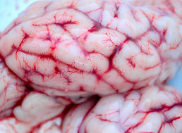 49 Interesting Facts and Stories About the Human Brain