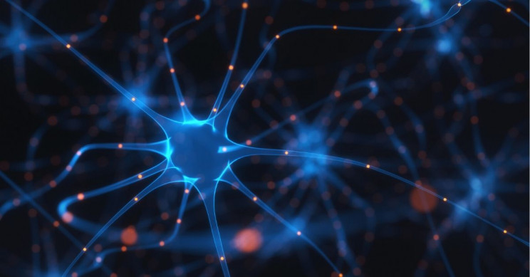 New Cancer-Fighting Protein Can Also Help Regenerate Neurons