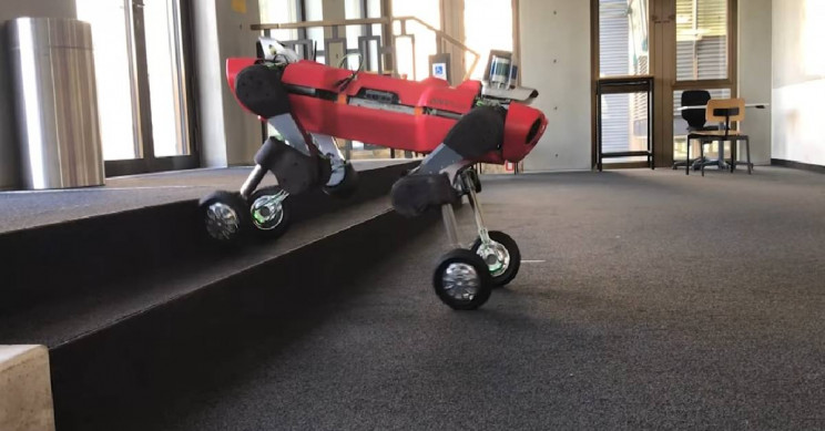 Meet ANYmal: Energy-Efficient Roller-Walking Robot