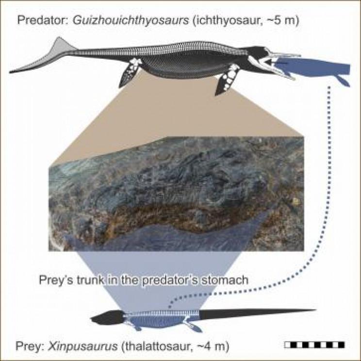 Prey in Reptile's Stomach