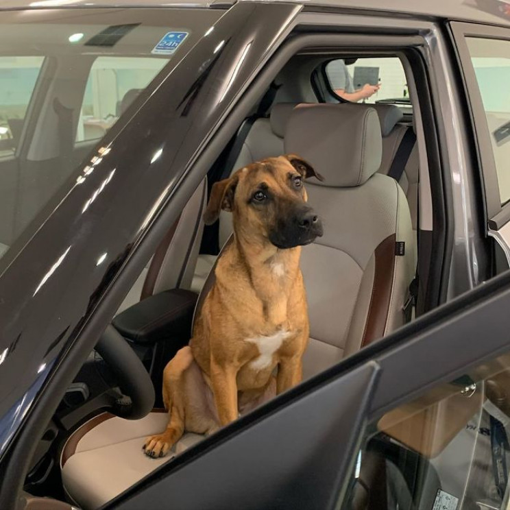 Hyundai Showroom in Brazil Hires Stray Dog as Sales Consultant