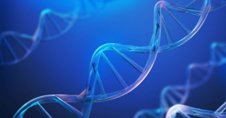 New Toolkit May Repair DNA Breaks Linked to Aging and Cancer