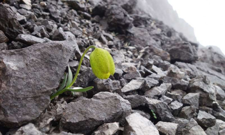 Chinese Flower Evolves To Turn Invisible and Escape Humans