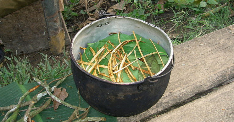 Ayahuasca Stimulates Formation of New Neurons in Hippocampus, Study Says