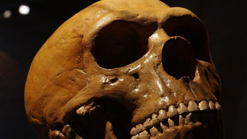 Neanderthal Gene Variant Reduces Risk of Severe COVID-19 Symptoms - Interesting Engineering