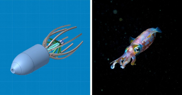 Squid-Inspired Robot Mimics Efficiency of Sea Creatures