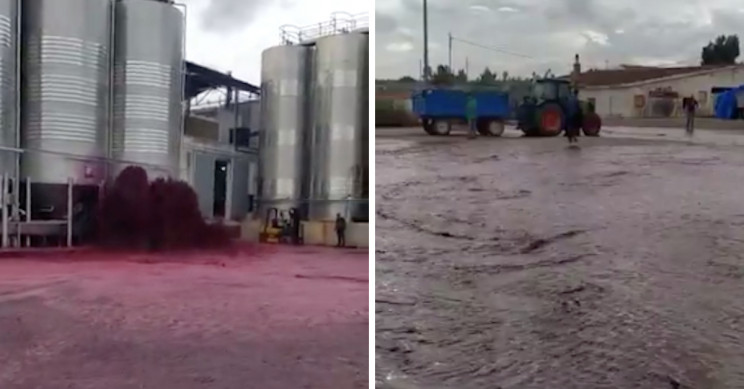 50,000 Liters of Wine Flood Out of Spanish Winery
