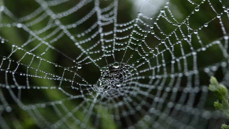 Artificial Spider Silk Is Stronger Than the Real Thing