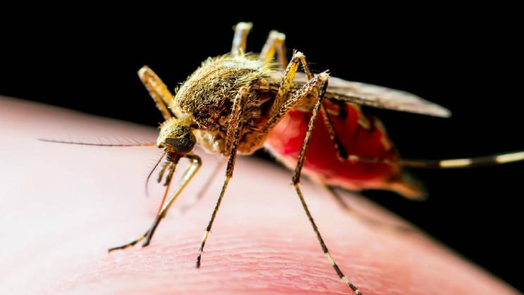 Breeding Malaria Out: Scientists Engineer Mosquitos to Spread Antimalaria Genes
