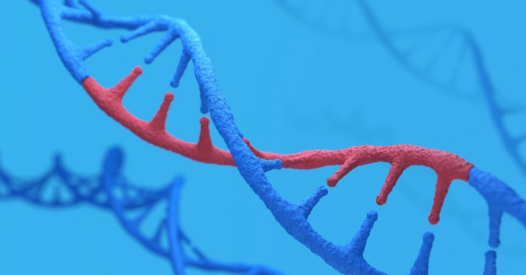 Americans With European, African Ancestry also Have Native American Genes