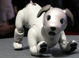 People in Japan Are Now Having Playdates for Their Robotic Pets