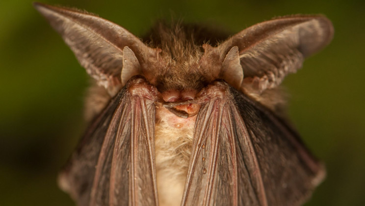 Humans Could Use Echolocation to Navigate Like Bats and Dolphins