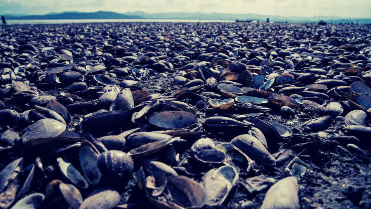 The Heat Wave Is Broiling Billions of Marine Animals Alive
