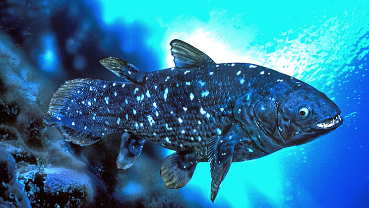 The Strange Biology of the Fish That Lives for a Century