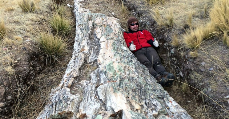 Petrified Trees Found in Peruvian Plateau Suggest Drastic Climate Changes