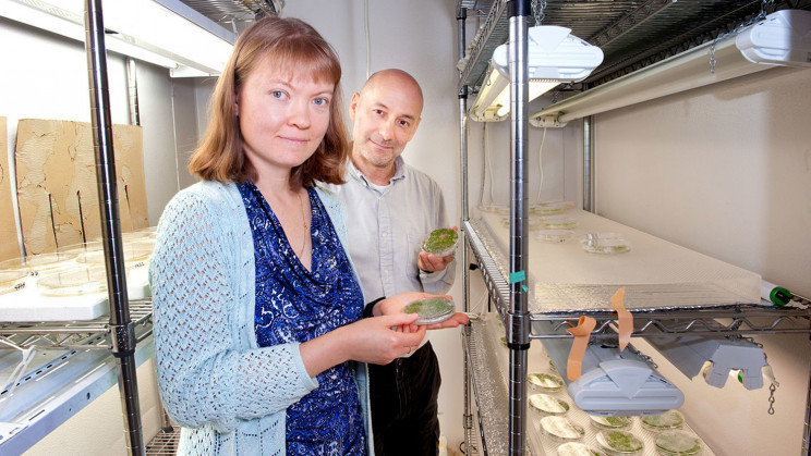 Genetic Engineering Tools Allow for More Easily Modified Plants