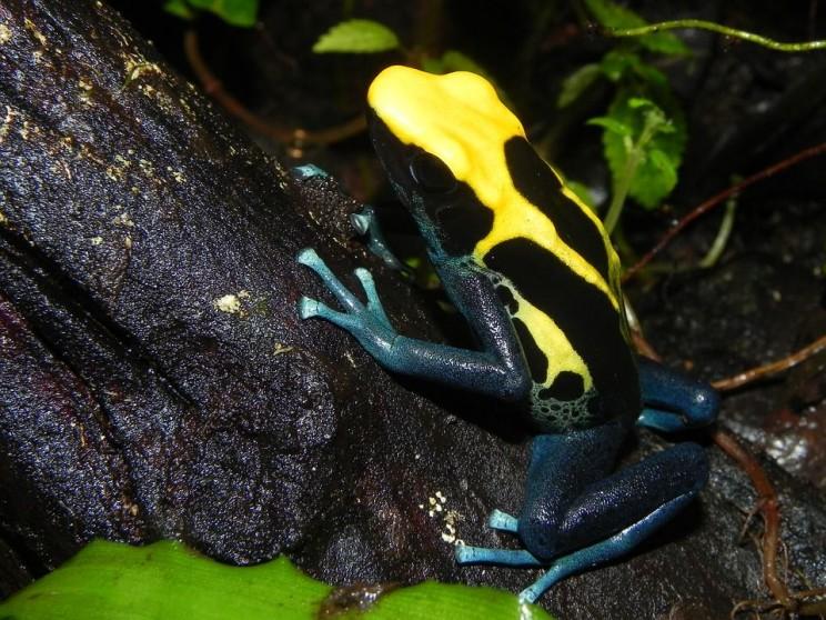 dangerous chemicals frogs
